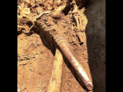 Найден, Золотой Скифский меч, 2019, Found, Golden Scythian Sword