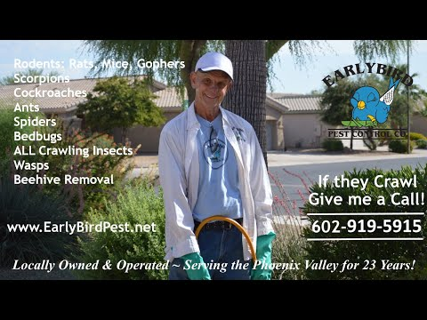 pest-control-phoenix-scottsdale-paradise-valley-goodyear-glendale-az-bugs-rodents-rats-bees-insects