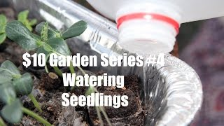 $10 Garden Series #4 - How To Water Vegetable Seedlings