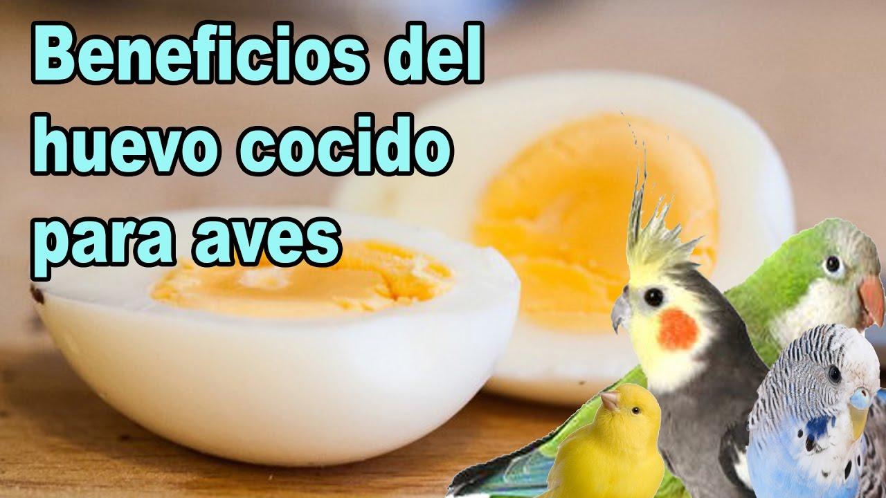 Mi mundo verde dieta del huevo cocido