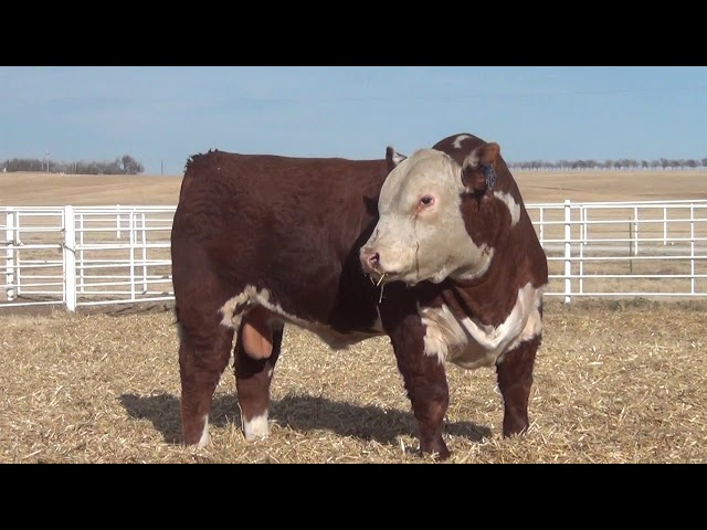 Express Ranches Lot 226