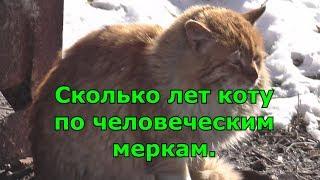 Сколько лет коту по человеческим меркам.