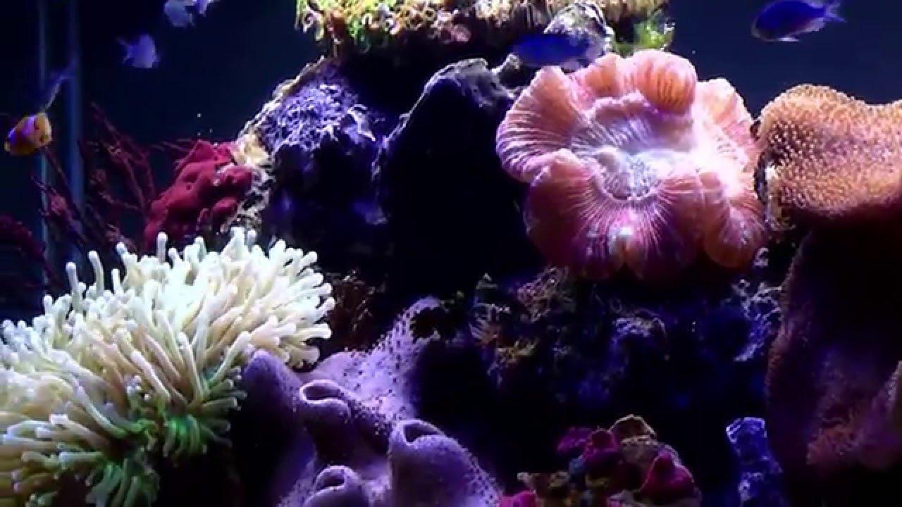 Fluval led aquarium lighting euro version youtube mozeypictures Gallery