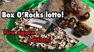 Win! - Box O'Rocks Lotto is back! OR Hurricane sale!