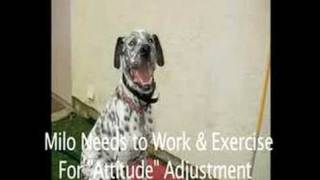 Dog Training Camp San Diego Aggression Behavior Modification