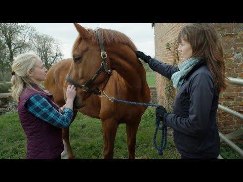 world-horse-welfare-championplus-with-veterinary-insurance-membership
