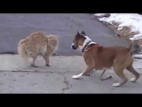 Funny Cat and Dog Videos 2