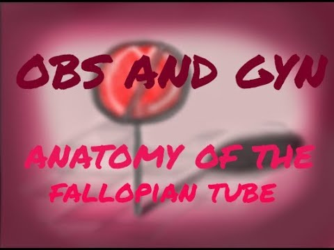 Parts of fallopian tube anatomy