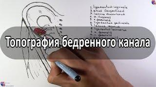 Бедренный канал - meduniver.com
