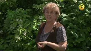 видео Чёрная смородина - полезные свойства, посадка и уход за кустарником, фото
