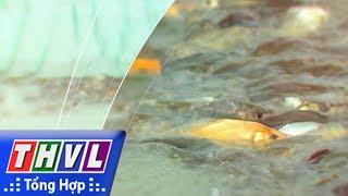 THVL l Nhịp sống đồng bằng: Nuôi cá ruộng mùa nước