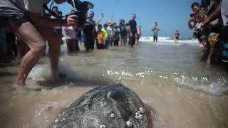 Going back home - sea turtle