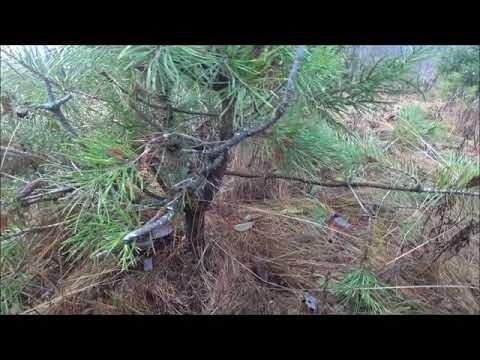 Вопрос: Когда лучше брать ямадори – осенью или весной?