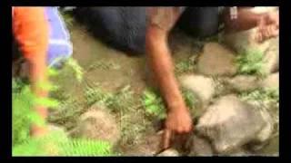 ngurek asik mancing belut 6 Kg. part 1