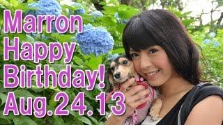 マロン Happy Birthday!!  My cute dog Marron 2nd Anniversary 佐藤さくら 佐藤さくら 動画 18