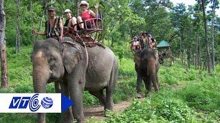 43 con voi nhà già nhất Tây Nguyên  | VTC