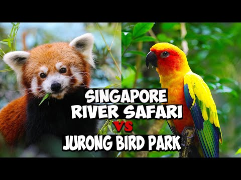 SINGAPORE RIVER SAFARI  VS JURONG BIRD PARK I SINGAPORE VLOG