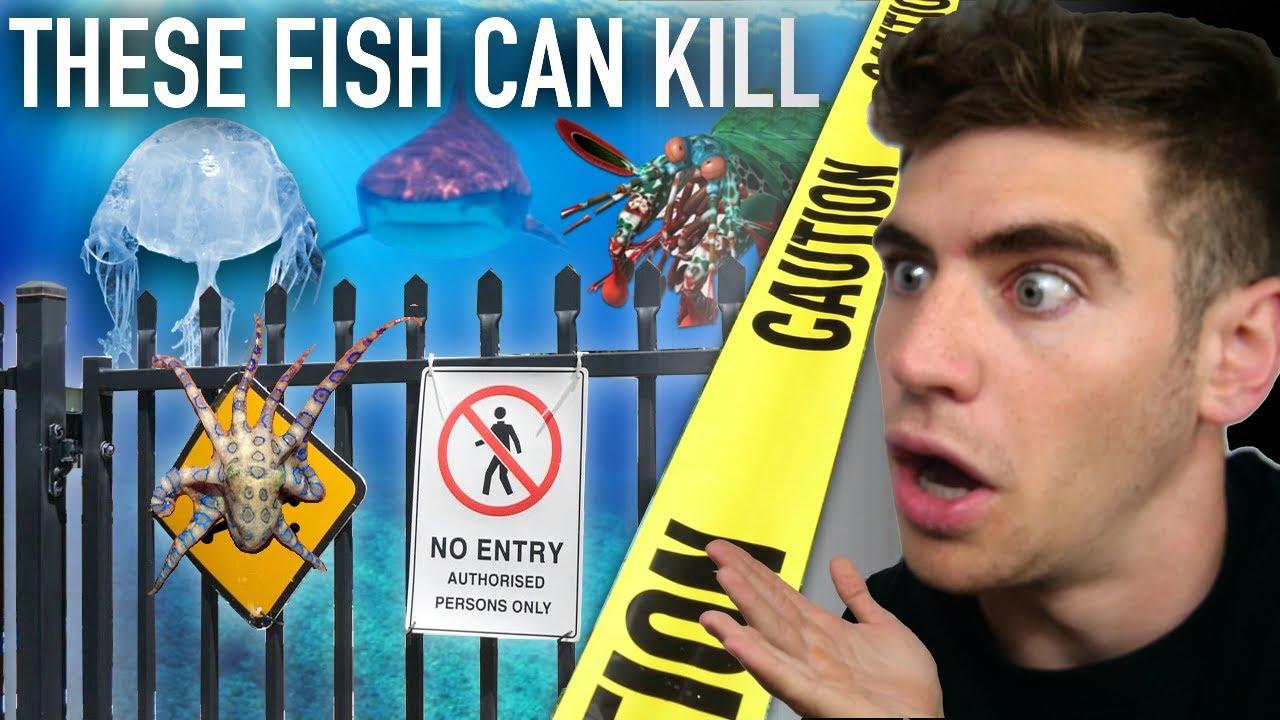 Download Enter the DEADLIEST Aquarium in the World... (most venomous fish) ☠️