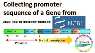 Collecting Promoter Sequence of a Gene from NCBI Database