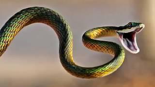 Короткий фильм про змей.💖