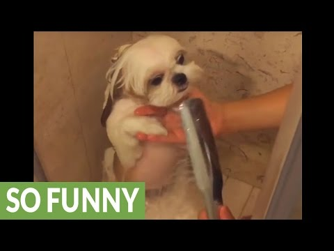 Dog's shower routine is too cute for words