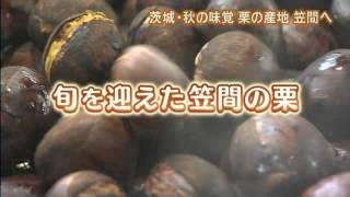 『磯山さやかの旬刊!いばらき』茨城の栗編【9月28日】 「磯山さやか...