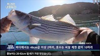 미국 줄농어 낚시 소개 at Castaic Lake (FTV 핫라인네트워크_카카)