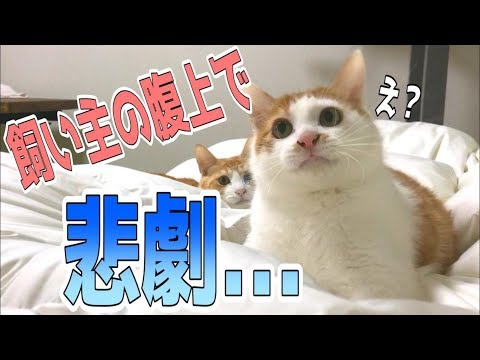 猫がお腹の上で遊んでたらとんでもない悲劇が…