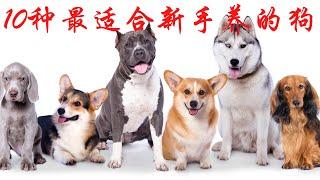 10种最适合新手养的狗狗你喜欢哪种呢