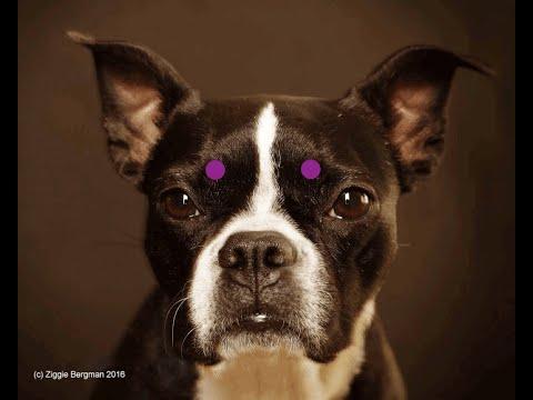 Relax Your Dog with Bergman Method Facial Reflexology