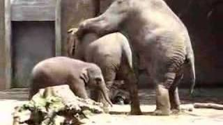 Repeat youtube video Elephant sex 2