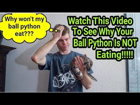 """**HOW TO GET YOUR BALL PYTHON TO EAT!!!** """"My Ball Python Wont Eat!"""""""