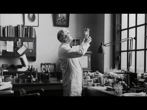 Download Almanac: The discovery of penicillin