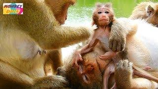 Carla mom catch & hug Charlee afraid of Tara | Baby try remove want to walk | Monkey Daily 4200