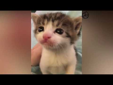 Funny Cats and Kittens Meowing Compilation 2018 🔴
