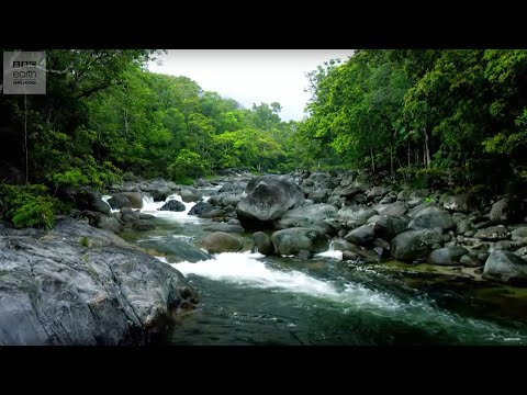 10 Hours Of Relaxing Planet Earth II Jungle Sounds | Earth Unplugged
