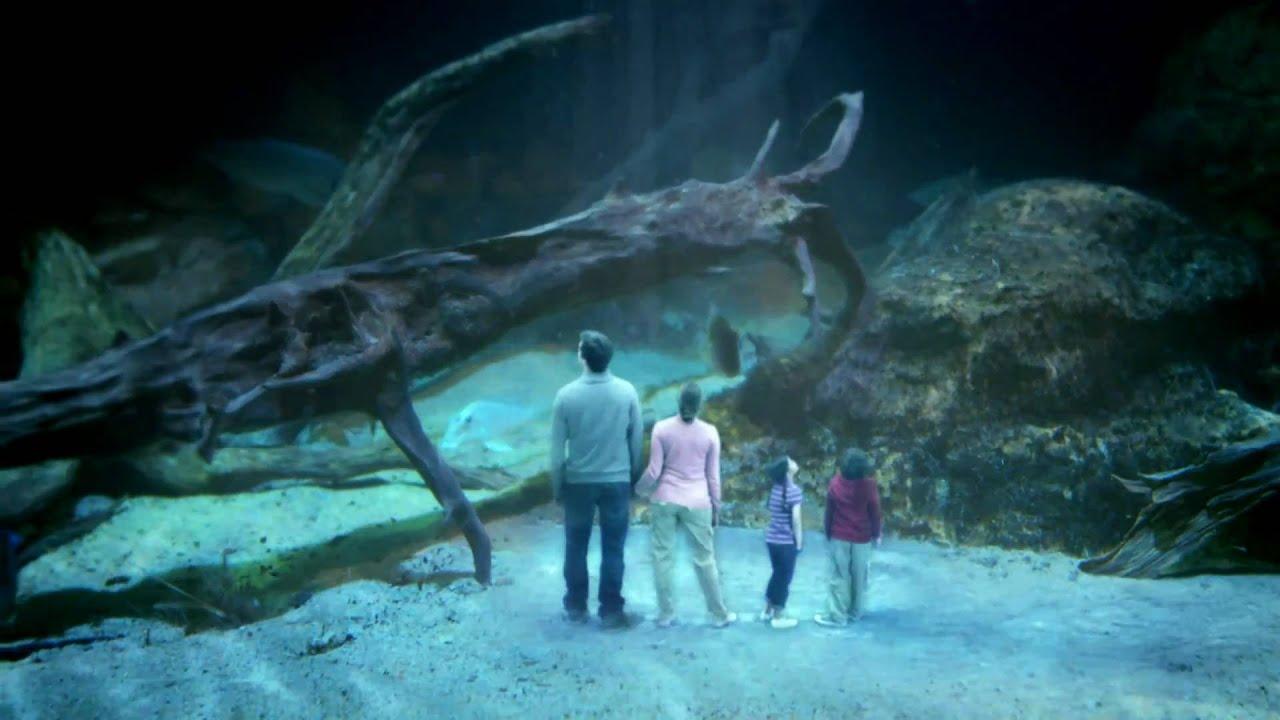 Fish aquarium vancouver - Dalila Bela Amazon Vancouver Aquarium Commercial 2011