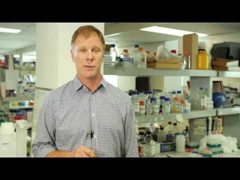 Garvan Institute Of Medical Research – Recent Highlights