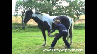 Forelimb Stretches - Equine Physiotherapy By Surrey Vet Physio
