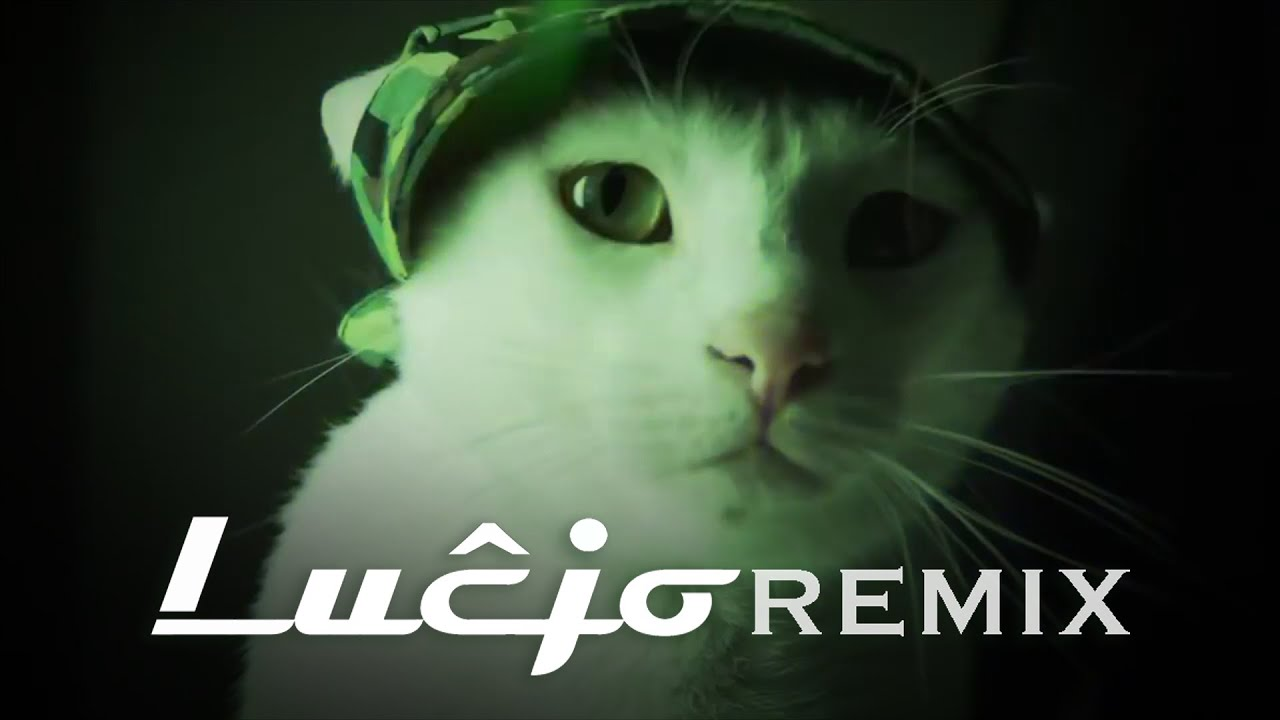 Cat Vibing to Ievan Polkka Meme (Lahar Remix) | Bilal Göregen
