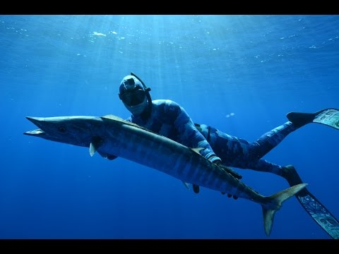 Spearfishing Tonga - Wahoo, Dogtooth Tuna, Job Fish, Mu, whales and sharks