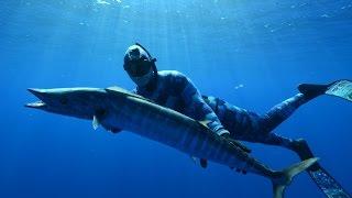 Spearfishing Tonga - Wahoo, Dogtooth Tuna, Job Fish, Mu, whales and sharks