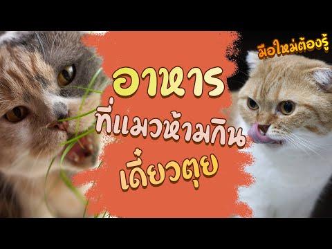 อาหารที่แมวห้ามกินเดี๋ยวตุย : มือใหม่ต้องรู้ EP25