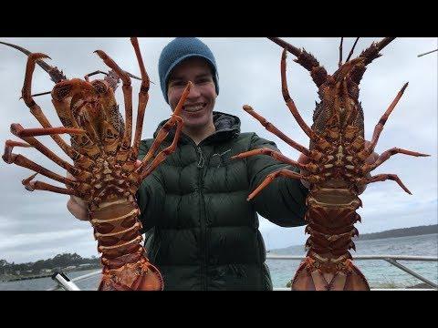 Crayfish Diving Southport, Tasmania