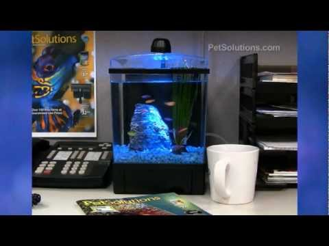 Petsolutions Glofish 1 5 Gallon Aquarium Youtube