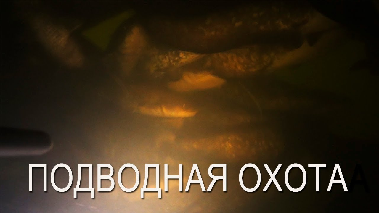 Подводная охота на Десне на сома и судака. Мое снаряжение для подводной охоты в холодное время года