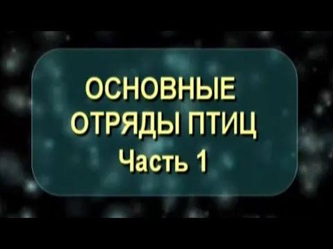 Вопрос: Почему в Западной Сибири не видно снегирей (см.)?