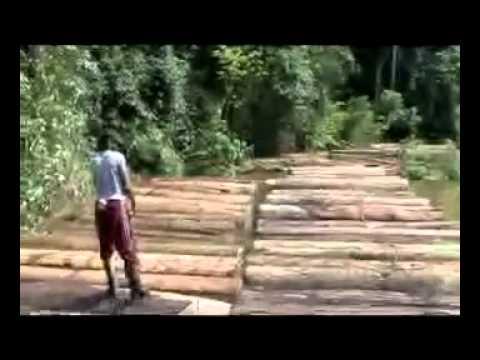 PELIGRO DE LA SELVA ECUATORIANA