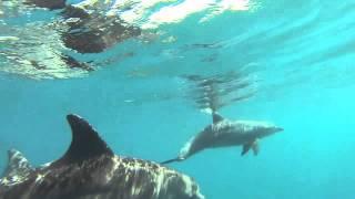 Our Ocean Adventures