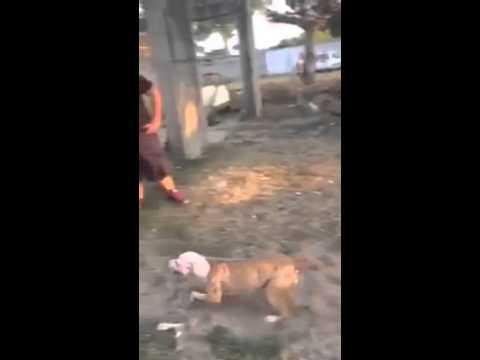 Dog jumps really high